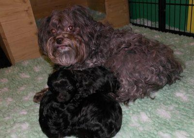 Oma Ruby hat den neuen Auslauf auch erkundet. Heinrich macht es sich auf Hermine und mir gemütlich. Und Oma Ruby rückt an uns heran, um uns zu wärmen. Das ist echt nett von ihr. So sind die Omas eben.