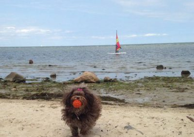 Ruby auf der Insel Poel